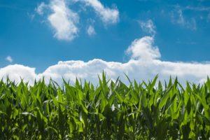 農家行政書士が教える認知症になる前に農地を信託しておくメリットとその方法